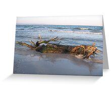 tree at the shore Greeting Card