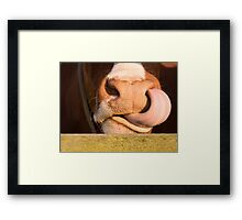 Wild cows Framed Print