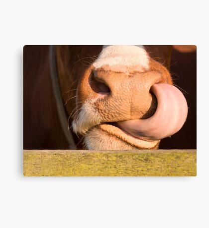 Wild cows Canvas Print