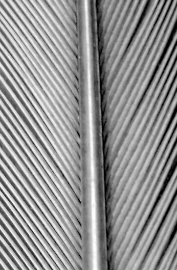 Silver Feather Lines :) by Honor Kyne