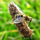 Honey Bee by Honor Kyne