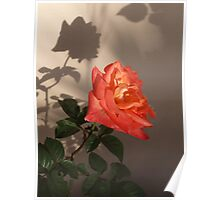 Rose Shadow Poster