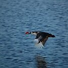 duck flight by paintin4him