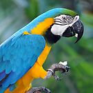 Birds & Animals Of The World. by Ralph de Zilva