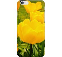 Yellow tulips in close up iPhone Case/Skin