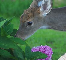 No ... not my flowers !!! by Tanya Bowers