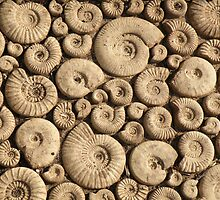 Fossils by Edward Denyer