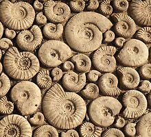 Fossils by Edward Denyer