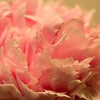 Pink Peony by Dorothy DuMond Cohen