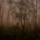 Watercolours - Mount Wilson NSW Australia - The HDR Experience by Philip Johnson
