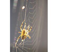 Web Spinning (4) Photographic Print