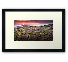 Gower heather sunset Framed Print