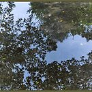 Puddle Reflections by Astrid Pardew