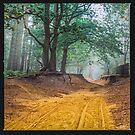 Making Tracks by redtree