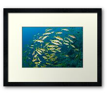 All these fish and not a single chip in site Framed Print