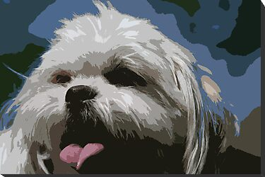 Shaggy Dog by cindylu