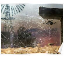 Redback Outback Poster