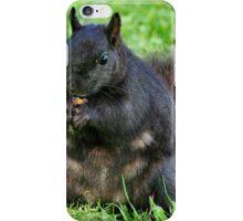 Black Squirrel iPhone Case/Skin