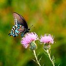 BUTTERFLIES by TomBaumker