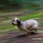 This Puppy's Fast by David Friederich