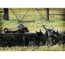 Three dogs and a tub...  Photographic Print