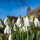 Snowdrops in the church by Robert Gipson