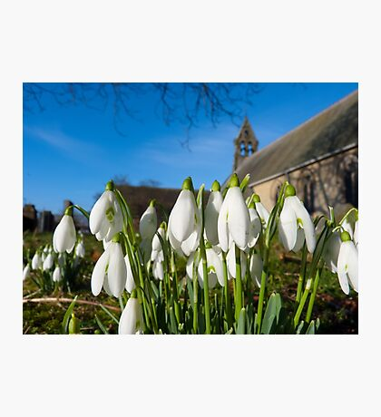 Snowdrops in the church Photographic Print