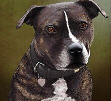 Stafforshire bull terrier 1 by Carl Conway