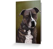 Stafforshire bull terrier 1 Greeting Card