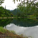 Applegate Lake by Nikki Collier