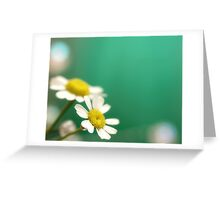Daisies on Brilliant Green Background Greeting Card