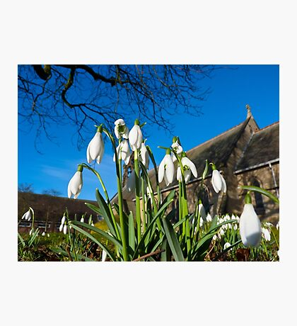 Snowdrops in the English church Photographic Print