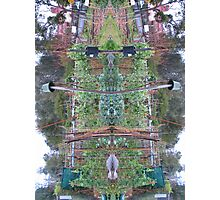 Northcote Community Gardens 10 Photographic Print