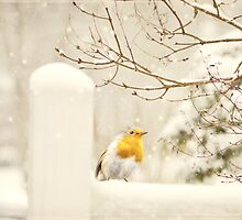 The little red robin on a snowy winters day  by chrissiexxx68