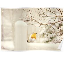 The little red robin on a snowy winters day  Poster