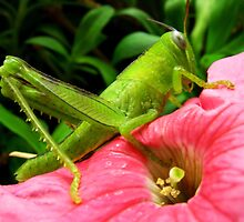 Grasshopper by JuliaWright