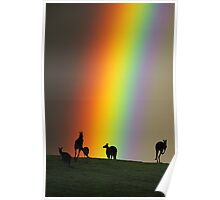 Kangaroos and Rainbow at Kangaroo Ground, Yarra Valley. Poster