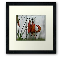 In the misty morning Framed Print