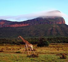 Giraffe II, Entabeni Lodge, South Africa by Ludwig Wagner