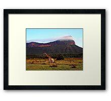 Giraffe II, Entabeni Lodge, South Africa Framed Print