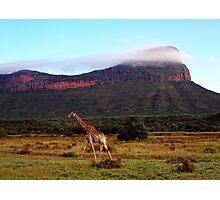 Giraffe II, Entabeni Lodge, South Africa Photographic Print