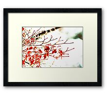 Snowy Maple Abstract Framed Print