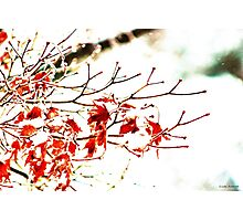 Snowy Maple Abstract Photographic Print