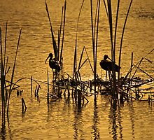 Wading Birds by Claire  Farley