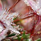 Morning Dew by sarahncraig