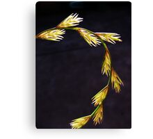 Beautiful stalk Canvas Print