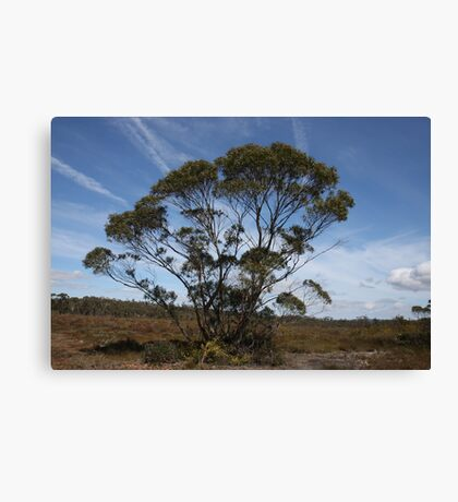 Barren Grounds Nature Reserve, NSW, Australia.  Canvas Print