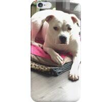 American bulldog  iPhone Case/Skin