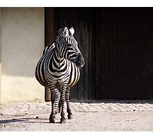 Longitudinally striped makes slim  ;-) Photographic Print