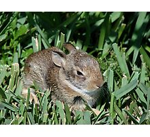 Baby Whiskers Photographic Print